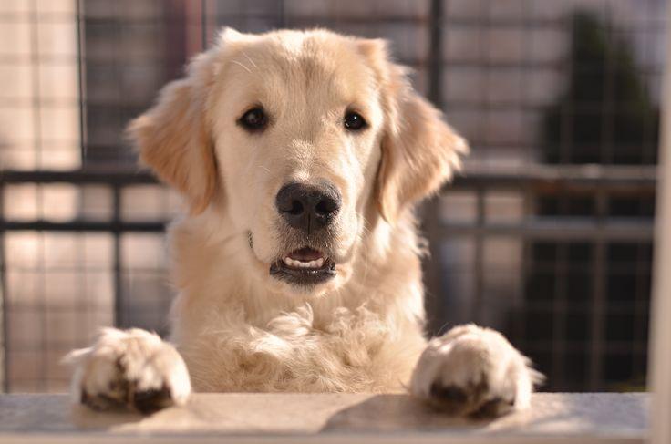 Nuestro hermoso perrito TOTO
