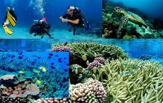 Andaman Tour Travel is a popular Tour Operator that offers exclusive Andaman Tour Packages and the best Andaman Honeymoon Packages for you to have a fabulous time in the Andaman and Nicobar Islands. Enjoy the gorgeous beauty of Andaman Islands with your dear ones choosing the best of packages offered by Andaman Tour Travel. http://andamantourtravel.com/