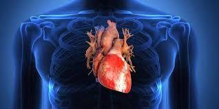 Obat Jantung >> Ketika jantung anda mengalami masalah pasti kekhawatiran yang akan anda rasakan saat ini, lalu untuk mengantisipasi semua nya, anda perlu mengatasi penyakit jantung tersebut dengan menggunakan obat herbal alami yang dapat menyembuhkan penyakit jantung secara cepat tanpa efek samping apapun.
