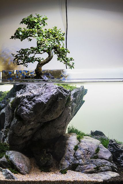 """Use your imagination"" by Filipe Oliveira. A tree aquascape with a real bonsai tree above water."