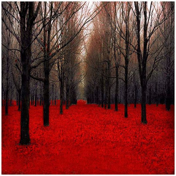 Haunting and Gothic Maple Forest in Fall. Dark red forest leaves, bare black branches and surreal tree trunks.