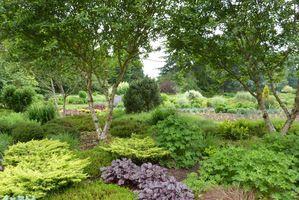 Jeśli rośliny okrywowe mają  piękne kwiaty lub liście - to dla nas dodatkowa miła premia i ozdoba ogrodu