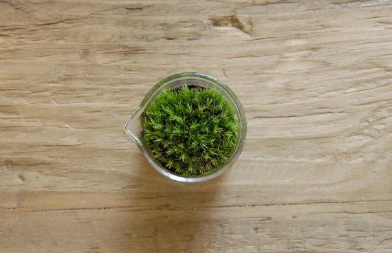 Mini Beaker Planter with Live Moss by Vertegris on Etsy, $22.00: Mini Terrarium
