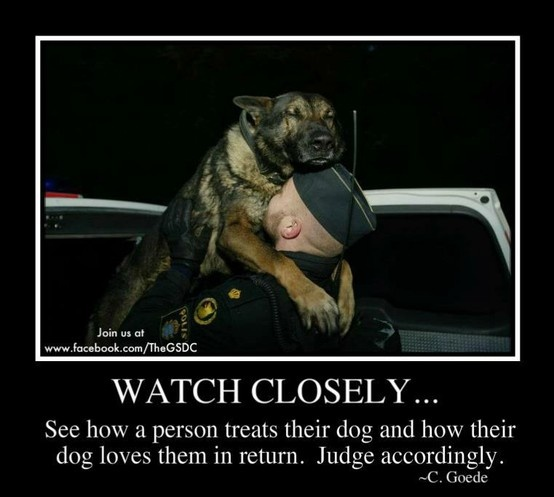 good way to judgePolice Offices, Heart, Heroes, Friends, Dogs, Pets, Things, German Shepherd, Animal
