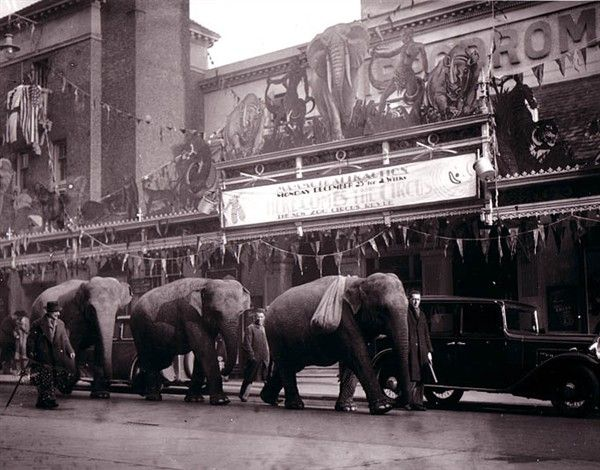 Elephants outside the Hippodrome, Middle Street, Brighton