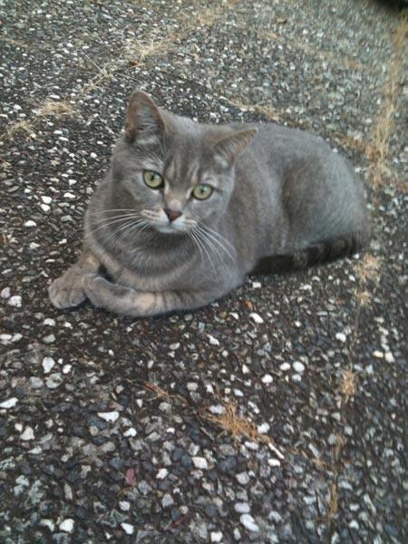 """Tausende Fotos süßer Katzen erreichten die Redaktion: Hier sehen Teil 16 der Bewerber des großen Wettbewerbs """"Deutschlands süßeste Katze gesucht""""."""
