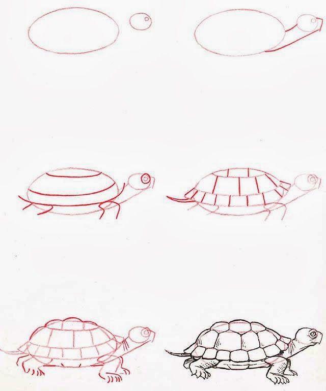 1000 ideas about tortue dessin on pinterest dessin - Comment dessiner une tortue ...