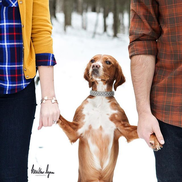 Krista had mentioned wanting to try to get a photo of the two of them holding Penny's paws (which I of course was crazy about!!) and Penny stood there like she was the queen of the day and posed away for me!! <3 The resulting images are just WAY too sweet and I had to share the smile!! Winter engagement picture with dog