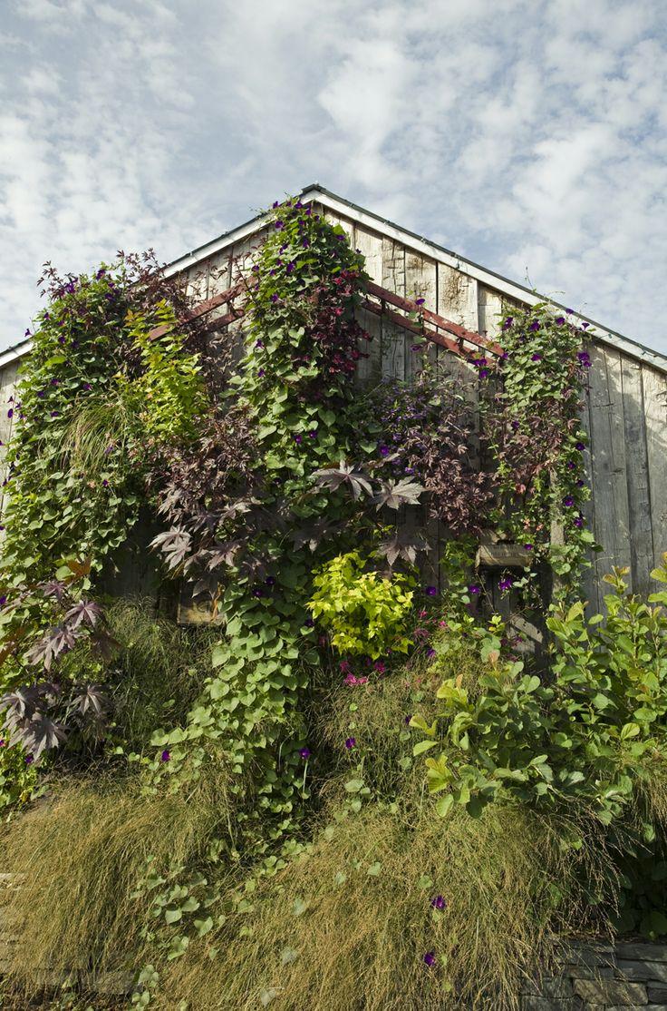 vertical garden at terrain glen mills pa vertical