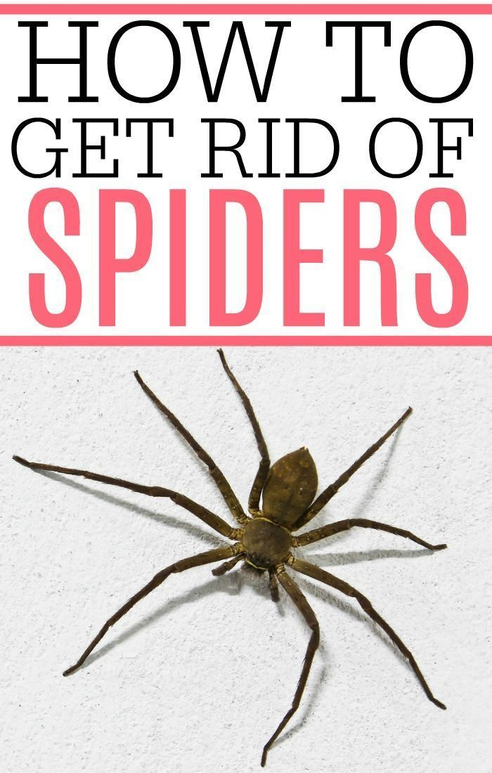 How To Get Rid Of Spiders Easy House Cleaning Tips Get