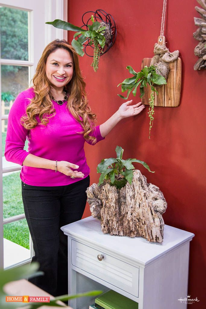 """SET YOUR RECORDERS! Home and Family-STAGHORN-FERN-SHIRLEY-BOVSHOW Watch Shirley Bovshow on Home & Family, Hallmark as she presents """"Creative Staghorn Plant Displays"""" on Thurs. 1/30/14 @ 10AM pst"""