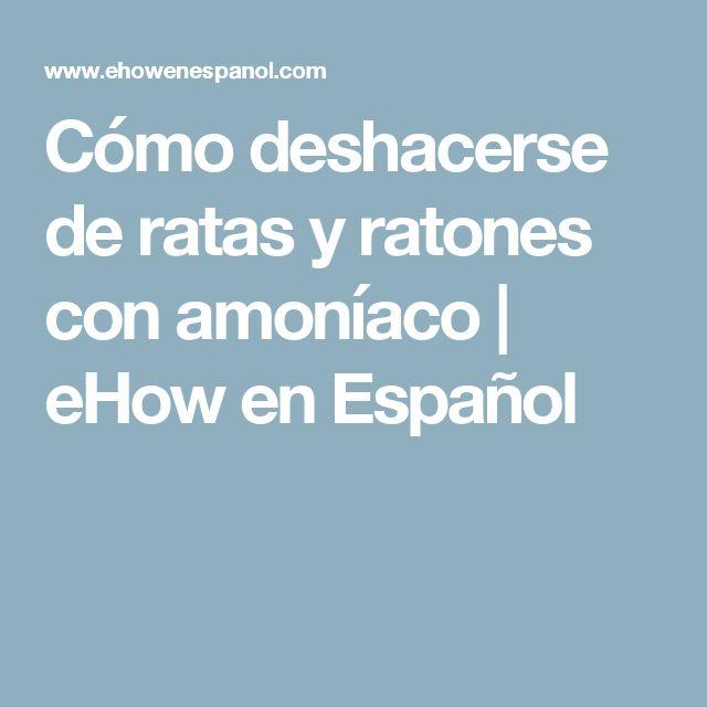 Cómo deshacerse de ratas y ratones con amoníaco | eHow en Español