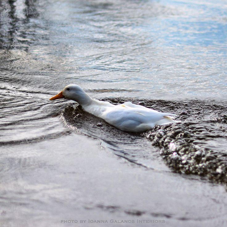 In River Ems, Meppen, DE photo by Ioanna Galanos Interiors https://www.facebook.com/Ioanna-Galanos-Interiors-269255199914651/