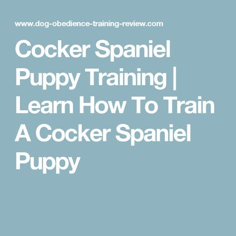 Cocker Spaniel Puppy Training   Learn How To Train A Cocker Spaniel Puppy