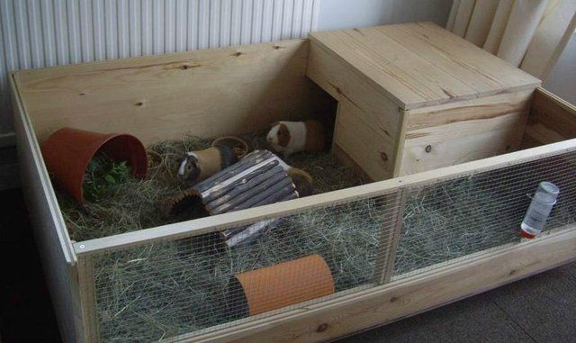 guinea pig run in the home