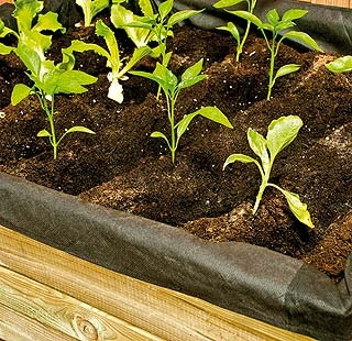 M s de 25 ideas incre bles sobre cultivo de guisantes en for Cultivo pimiento huerto urbano