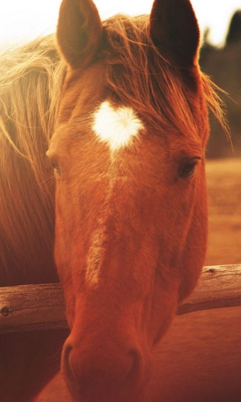 480x800 Wallpaper horse, face, light, mane