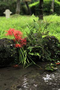 お花&風景写真の撮り方プロカメラマン簡単講座