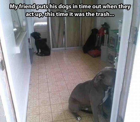 Dog punishment…