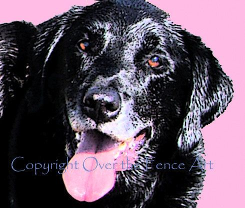 Handcrafted Art Photo Greeting Card Pet by overthefenceart on Etsy, $5.00
