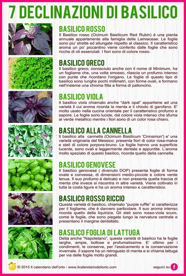 7 Declinazioni di Basilico