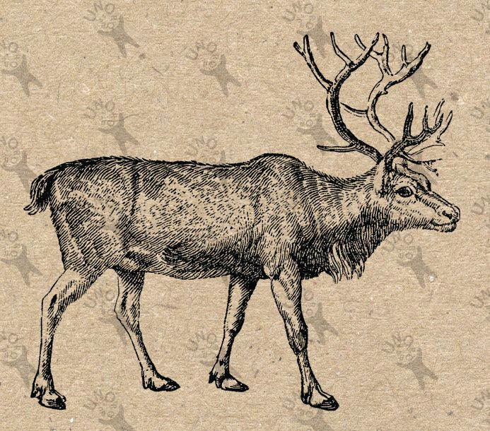 Vintage Reindeer Instant Download Digital printable clipart graphic Burlap Fabric Transfer Iron On Pillows Totes Tea Towels  etc HQ 300dpi by UnoPrint on Etsy