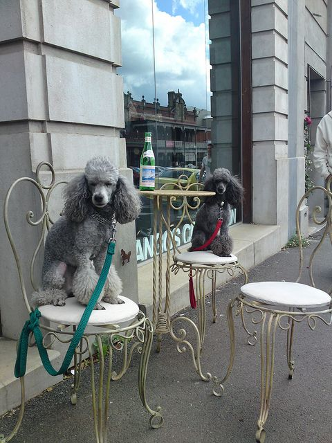 This is the perfect spot to dine & watch the Poodle Peace Parade, ❤