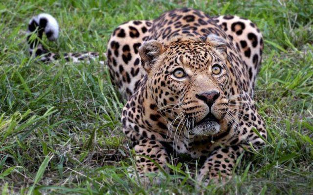 La felicità è fatta di luci e ombre, è a macchia di leopardo.