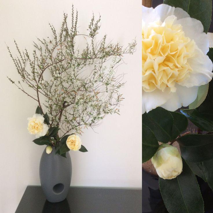 Camellias and Spirea