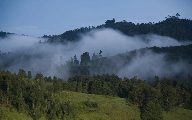 Kodaikanal is surrounded by the hills, making the place perfect destination for spending holidays. Local people called this place as Boon of Forest. Green grasslands of the hills give the appearance like green paint has been scattered over all of the hilly area.
