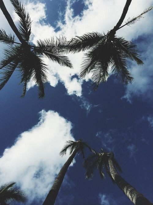 (11) Tumblr | Places | Summer vibes, Palm trees, Beach