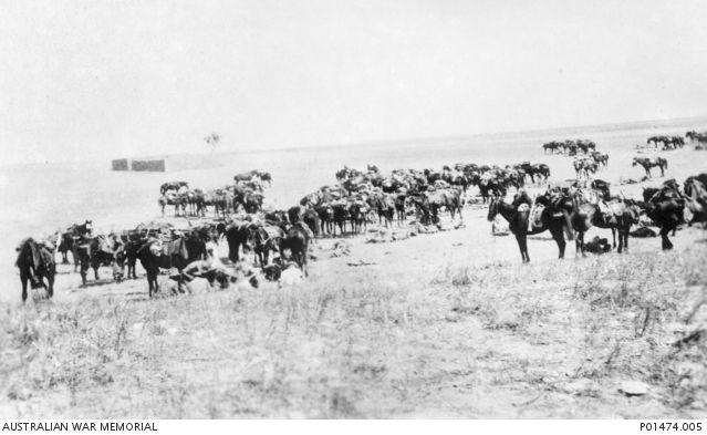 BEERSHEBA, PALESTINE. ?1917. C SQUADRON, 11TH AUSTRALIAN LIGHT HORSE REGIMENT RESTING BESIDE THEIR HORSES ON THE ROAD TO BEERSHEBA. (DONOR N. TURNER)
