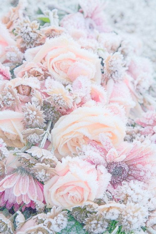 Frozen flowers.