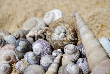 Shell Pile Royalty Free Stock Photo
