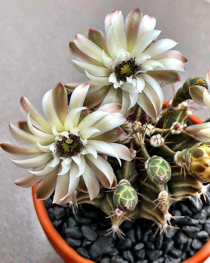 Las flores mas hermosas