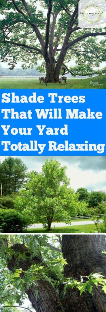 Best 25 shade trees ideas on pinterest - Trees for shade in small spaces concept ...