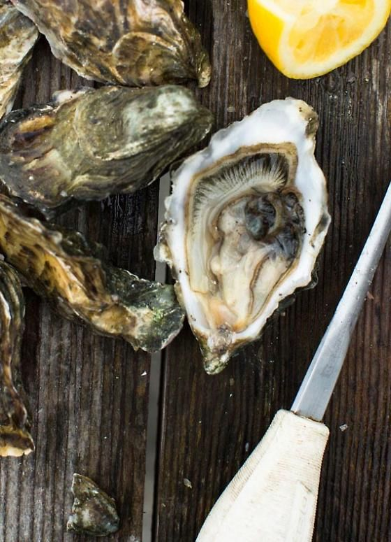 Take a road trip and score some oysters! From Scratch: Drakes Bay Oyster Company | 7x7