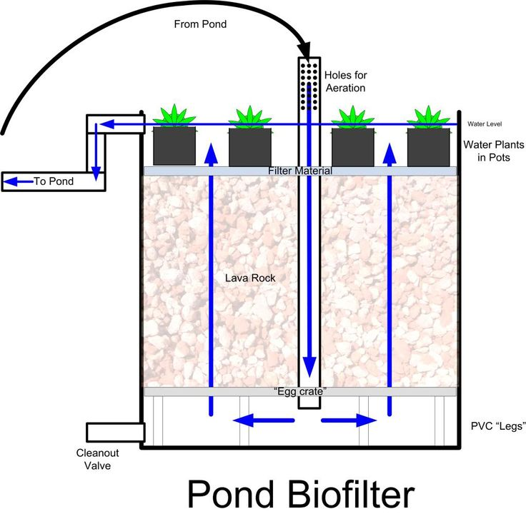 pond biofilter  --  We're thinking of adding a small flock of ducks to the homestead for eggs and meat. With that comes the need for water. I'd love something a bit nicer and more natural than just a kiddie pool so building a small water feature is ideal. Adding a small DIY bio-filter system that can be utilized in the small pond, water plants (which feed on waste products in the water) furthers the eco-balance we are working towards.