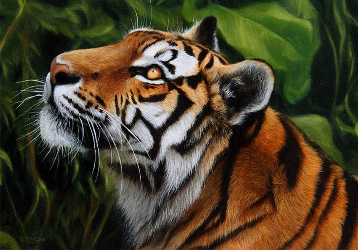 Tiger in the jungle painting