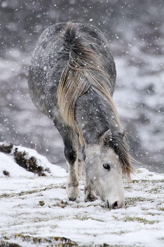 """tulipnight: """" Wild Pony by Jean Macdonald """""""