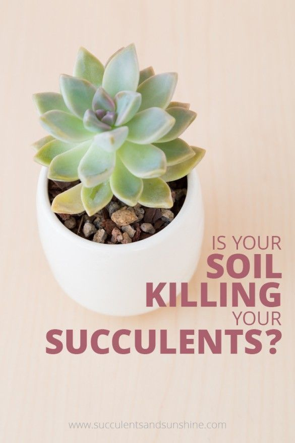Having the right soil is a cruicial part of keeping your succulents healthy