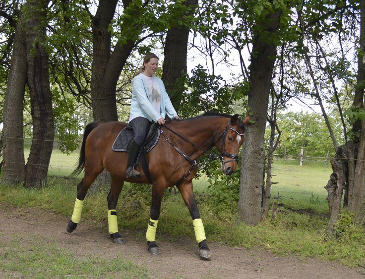 Schockemöhle Chrome Saddle Pad + BR Lime Bandages + HKM Felicitas Bridle Timi :)