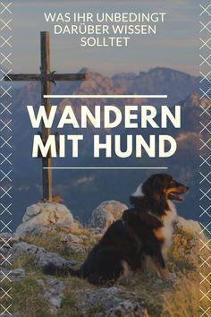 Alles, was ihr zum Wandern mit Hund wissen solltet!