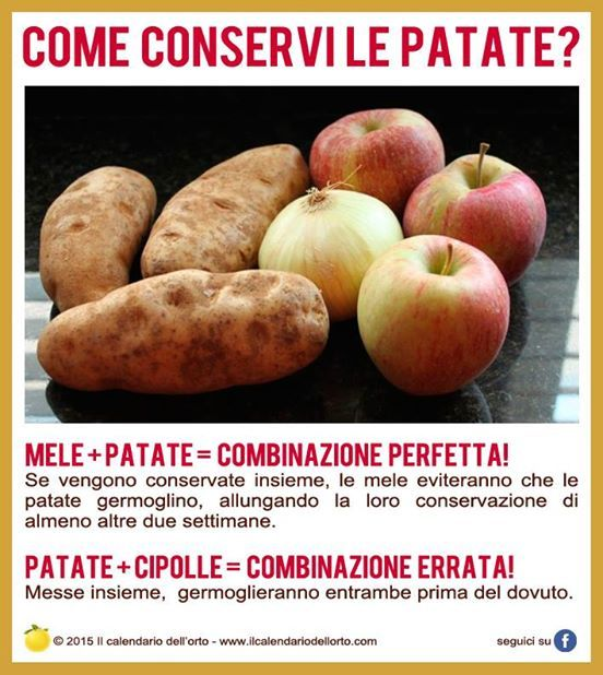 Come conservi le patate?
