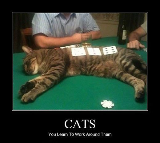 Cats.  You learn to work around them.  ;)