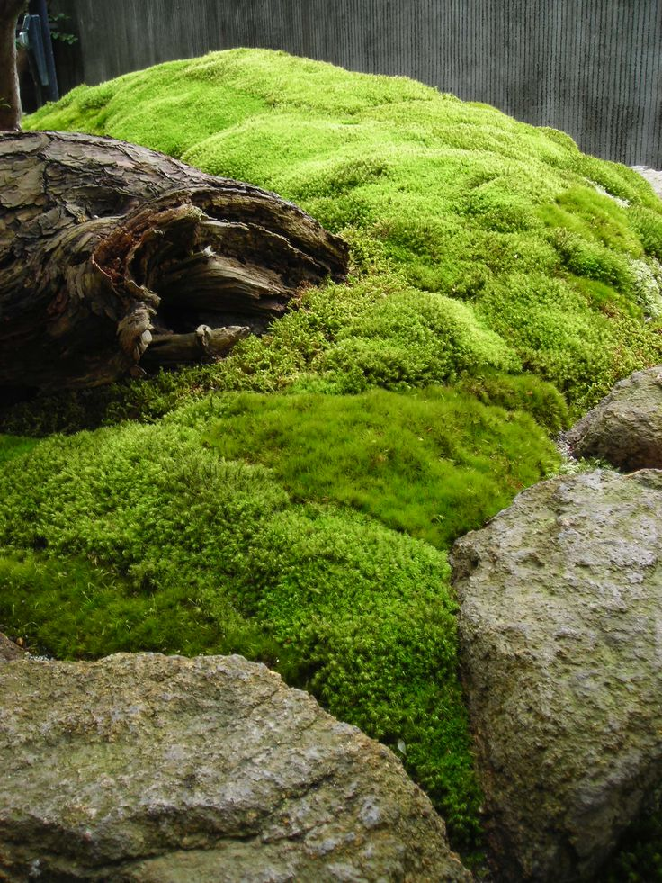 253 Best Images About Moss On Pinterest Gardens Parks