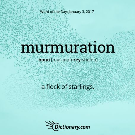 murmuration: a flock of starlings or an act or instance of murmuring