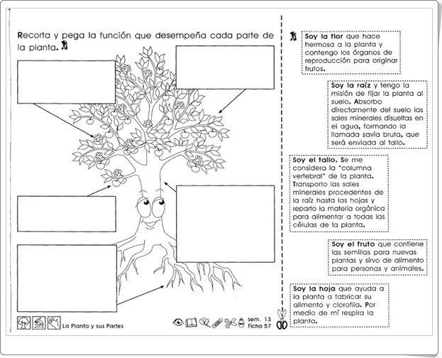 """""""La planta y sus partes"""" (Ficha de Ciencias Naturales de Educación Primaria)"""