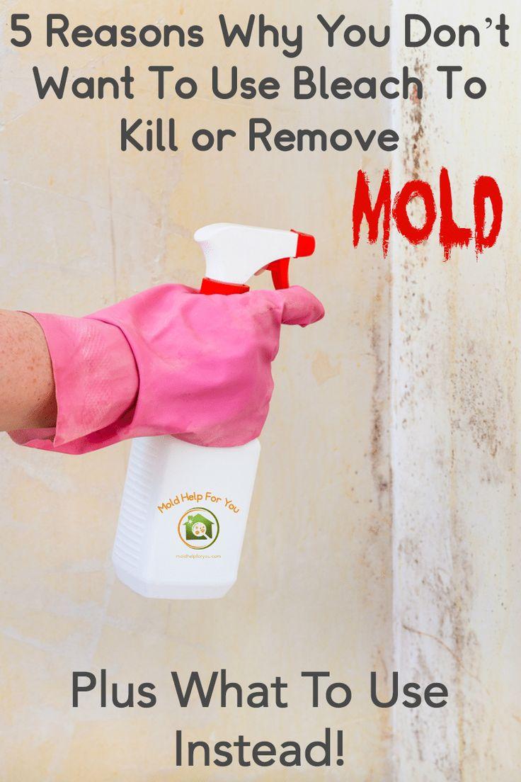 Does Bleach Kill Mold Mold remover, Kill black mold