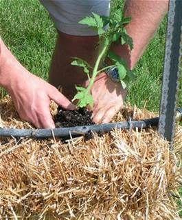 straw bail gardening - Bing Images